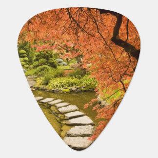 CANADA, British Columbia, Victoria. Autumn Guitar Pick