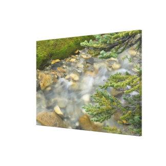 Canada, British Columbia, Yoho National Park. 4 Canvas Print