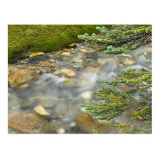 Canada, British Columbia, Yoho National Park. 4 Postcard