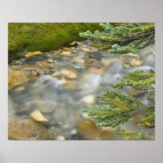 Canada, British Columbia, Yoho National Park. 4 Poster
