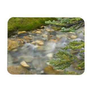 Canada, British Columbia, Yoho National Park. 4 Rectangular Magnet