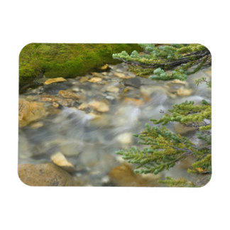 Canada, British Columbia, Yoho National Park. 4 Rectangular Photo Magnet