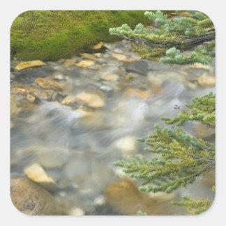 Canada, British Columbia, Yoho National Park. 4 Square Sticker