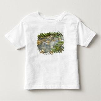 Canada, British Columbia, Yoho National Park. 4 Tee Shirt