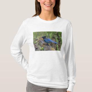 Canada:  British Columbia, Yoho NP, Stellar jay, T-Shirt