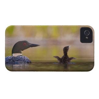 Canadá, Columbia Británica, bribón común, criando  Case-Mate iPhone 4 Carcasas