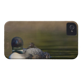 Canadá, Columbia Británica, bribón común, criando iPhone 4 Case-Mate Carcasa
