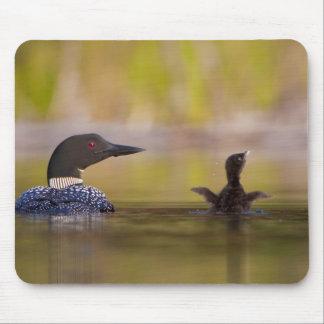 Canadá Columbia Británica bribón común criando Tapete De Ratón