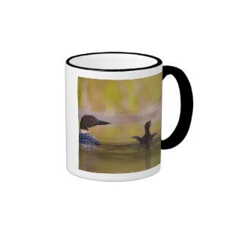 Canadá, Columbia Británica, bribón común, criando  Tazas De Café