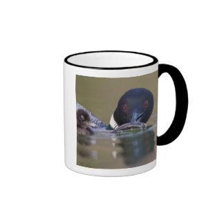 Canadá, Columbia Británica, bribón común, criando Taza De Café