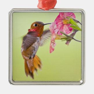Canadá Columbia Británica colibrí rufo Ornamente De Reyes