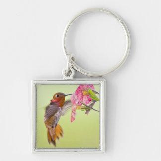 Canadá, Columbia Británica, colibrí rufo Llavero Personalizado