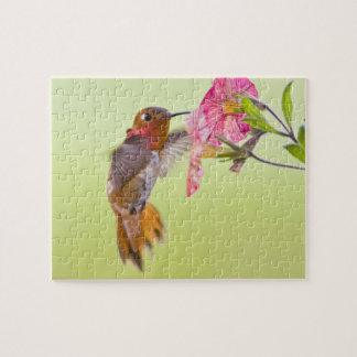 Canadá, Columbia Británica, colibrí rufo Puzzles Con Fotos