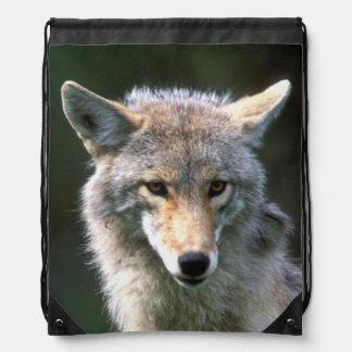 Canadá, Columbia Británica, coyote (latrans del Ca Mochilas