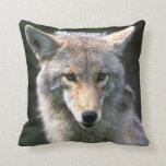 Canadá, Columbia Británica, coyote (latrans del Cojín