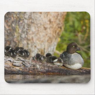 Canadá Columbia Británica Goldeneye común Tapetes De Ratones