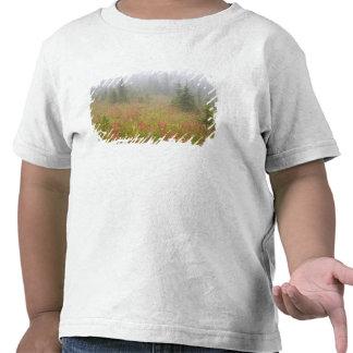 Canadá Columbia Británica nacional de Revelstoke Camisetas