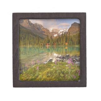Canadá, Columbia Británica, parque nacional de Yoh Cajas De Joyas De Calidad