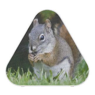 Canadá, Columbia Británica, pino de la ardilla roj Altavoz Bluetooth