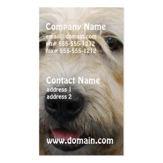 Cañada de las tarjetas de visita de Imaal Terrier