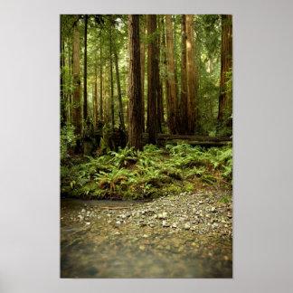 Cañada del bosque de la secoya poster