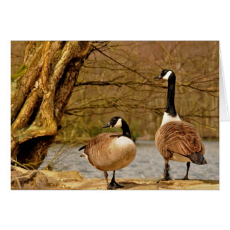 canada geese002 cards