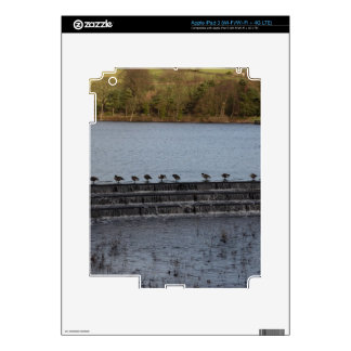 Canada Geese All In A Row iPad 3 Decal
