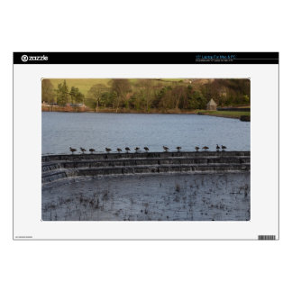 Canada Geese All In A Row Skin For Laptop
