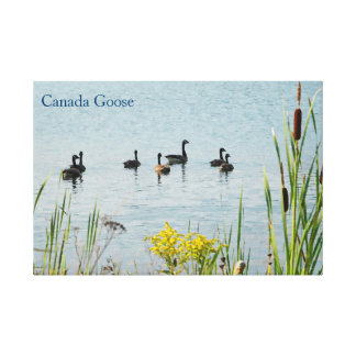 Canada Geese And Cattails Canvas Print