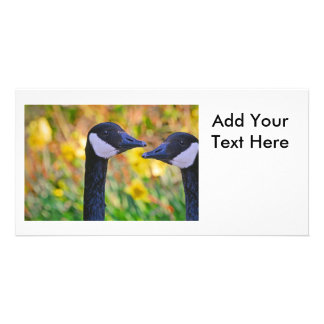 Canada Geese and Daffodils Card