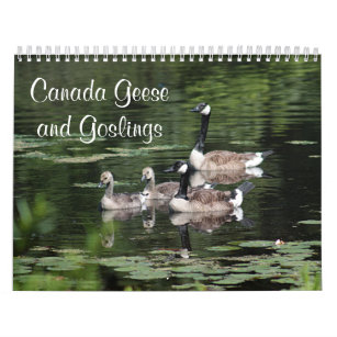 Canada Geese and Goslings Calendar