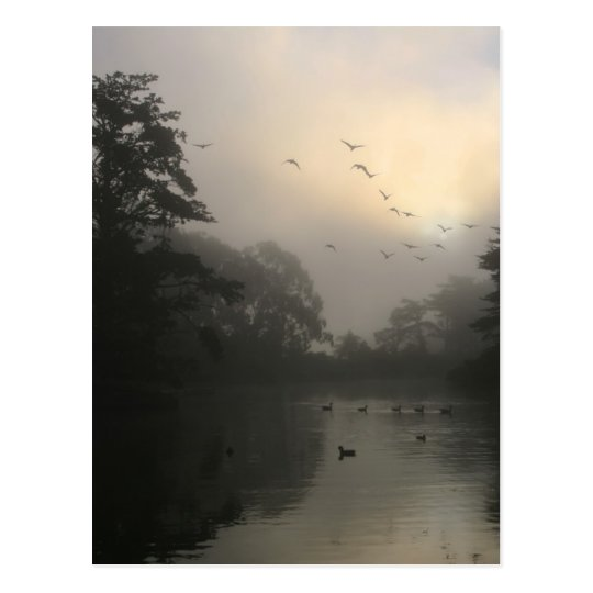 Canada Geese and Morning Fog Postcard