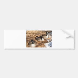 Canada Geese Car Bumper Sticker