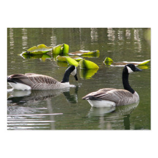 Canada Geese Business Card Templates