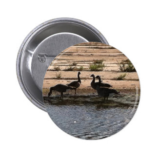 Canada Geese by the Puddle 1 Pinback Button