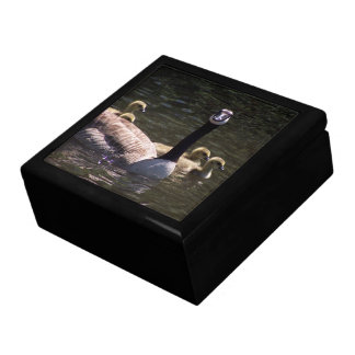 Canada Geese Goslings Mama Birds Wildlife Gift Box