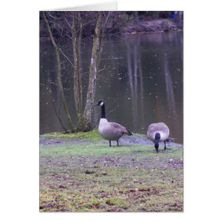 canada geese greeting cards