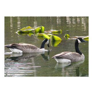 Canada Geese Personalized Announcements