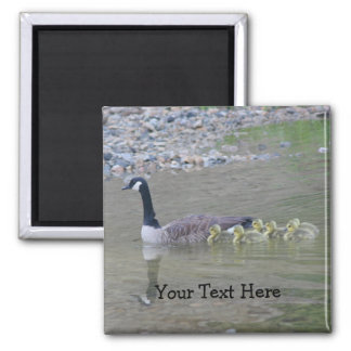 Canada Geese Mom Babies Nature Photo Magnet