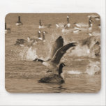 Canada Geese Mouse Pad