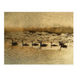 Canada Geese on Golden Pond Postcards