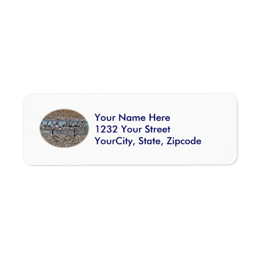 Canada Geese on Green Lane Reservoir Return Address Labels