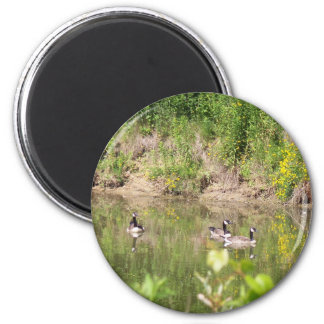 Canada Geese on Pond Magnet
