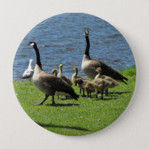 Canada Geese on the Grass by the Water Button