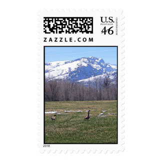 Canada Geese on the Ranch Postage Stamp