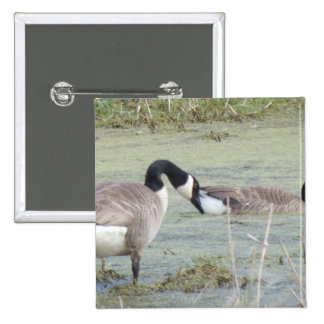 Canada Geese pair in algae covered swampy pond Button