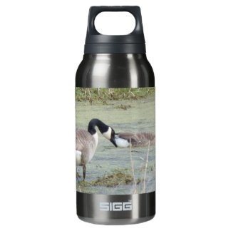 Canada Geese pair in algae covered swampy pond Insulated Water Bottle