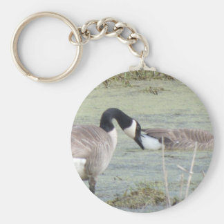 Canada Geese pair in algae covered swampy pond Basic Round Button Keychain