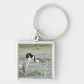 Canada Geese pair in algae covered swampy pond Silver-Colored Square Keychain