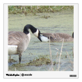Canada Geese pair in algae covered swampy pond Wall Sticker